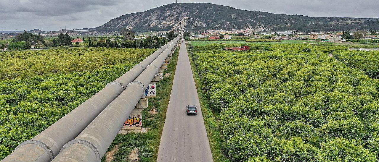 Tuberías del trasvase rodeadas de explotaciones agrícolas en la comarca de la Vega Baja.  | TONY SEVILLA