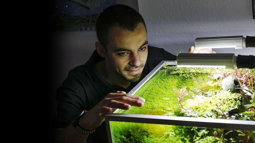 El negocio de un gijonés que vende medusas como mascota o adorno doméstico