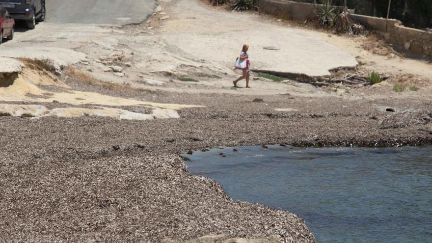 La EUIPO organiza una jornada de limpieza en La Calita del Cabo de las Huertas