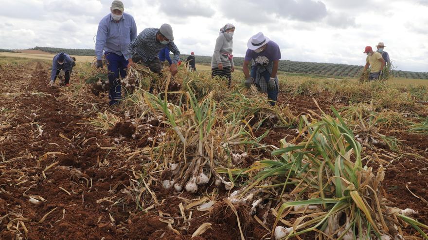 UPA muestra su apoyo a los trabajadores del campo