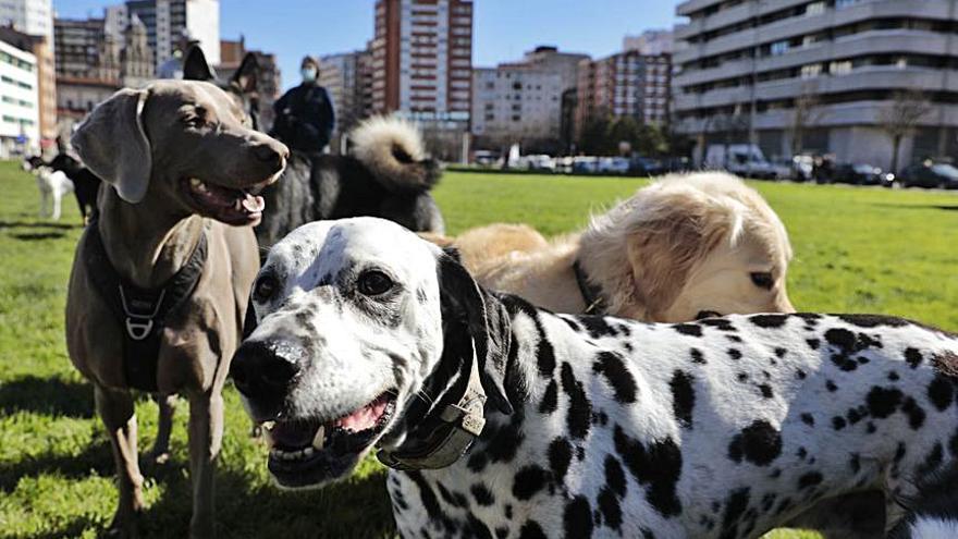 Paseadores de perros: una profesión en auge