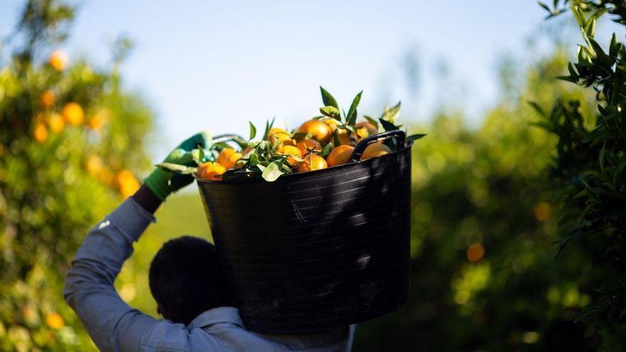 Mercadona apuesta por Castelló en la compra de más de 200.000 toneladas de cítricos nacionales