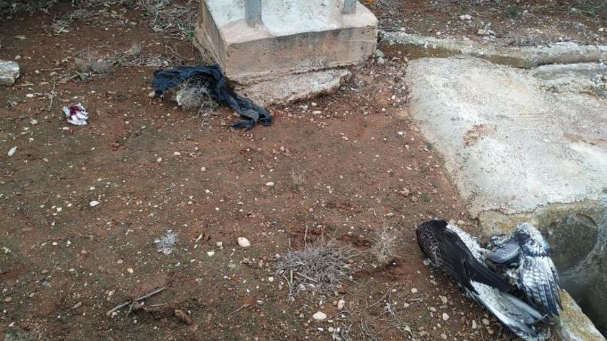 Muere electrocutada una águila perdicera en Oliva
