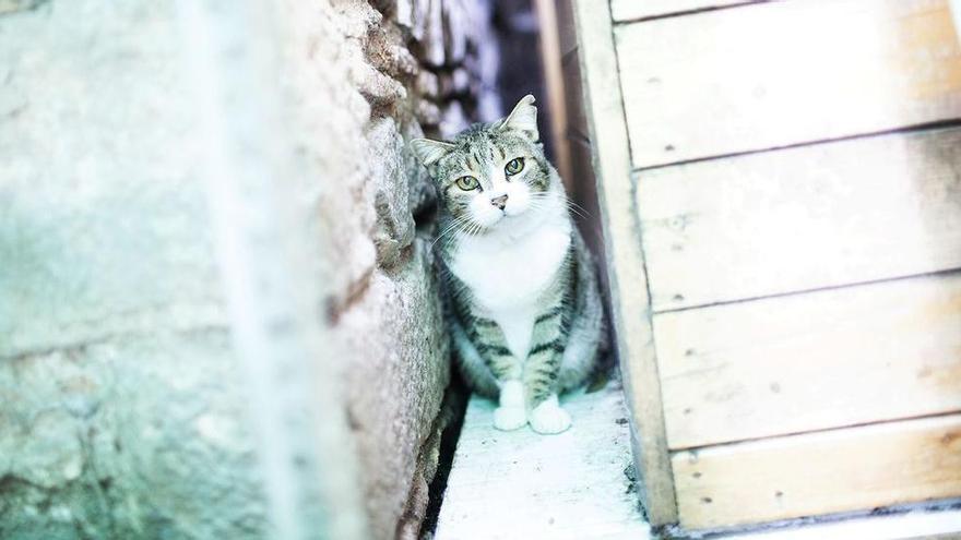 L'assalt a un centre d'esterilització de felins a Barcelona acaba amb dos gats morts