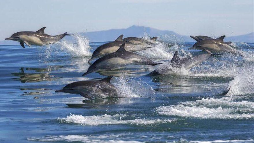 El reto de proteger el 30% de los océanos en 2030
