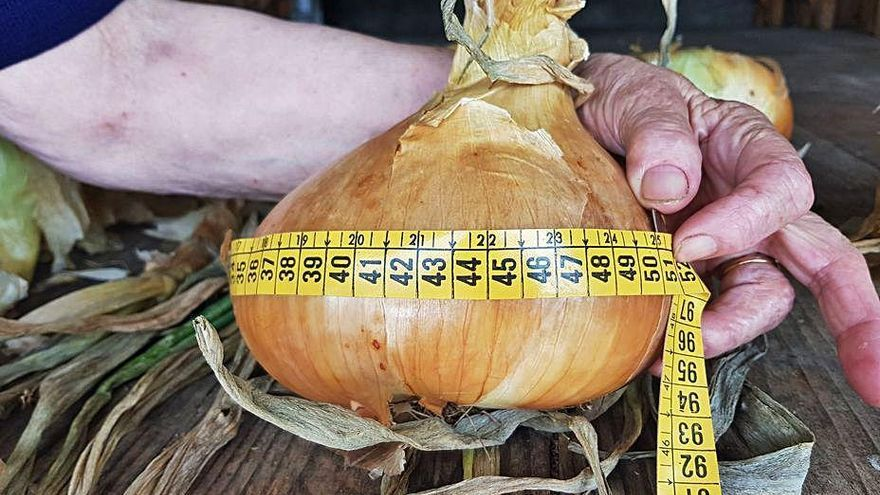 Cebollas de récord en Rozaes