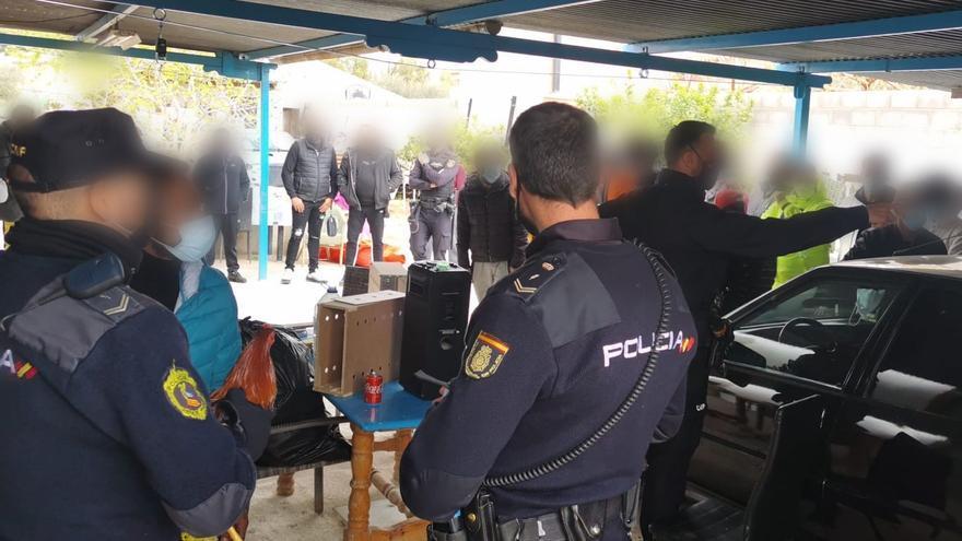 Desmantelan en Alicante un recinto secreto donde se celebraban peleas de gallos