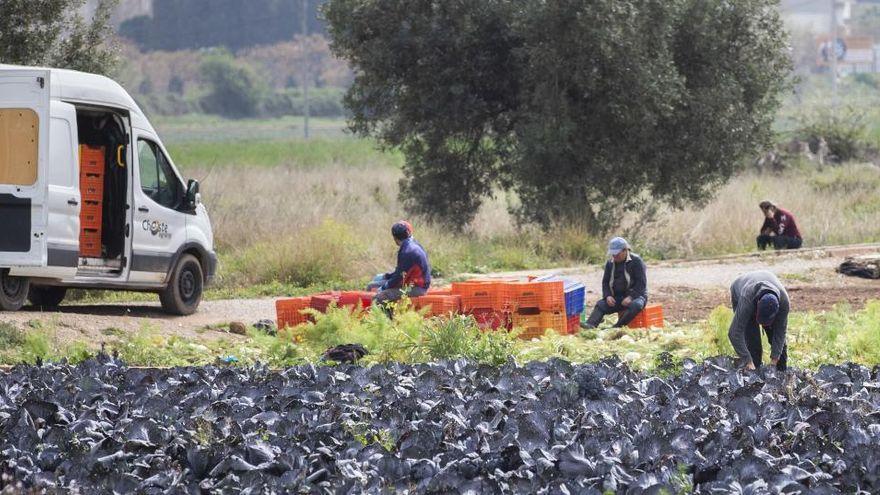 Un trabajador agrícola sufre un golpe de calor mientras trabajaba en una finca de Cartagena