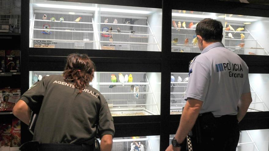 La Policia Municipal i els Agents Rurals inspeccionen les botigues d'animals de Girona