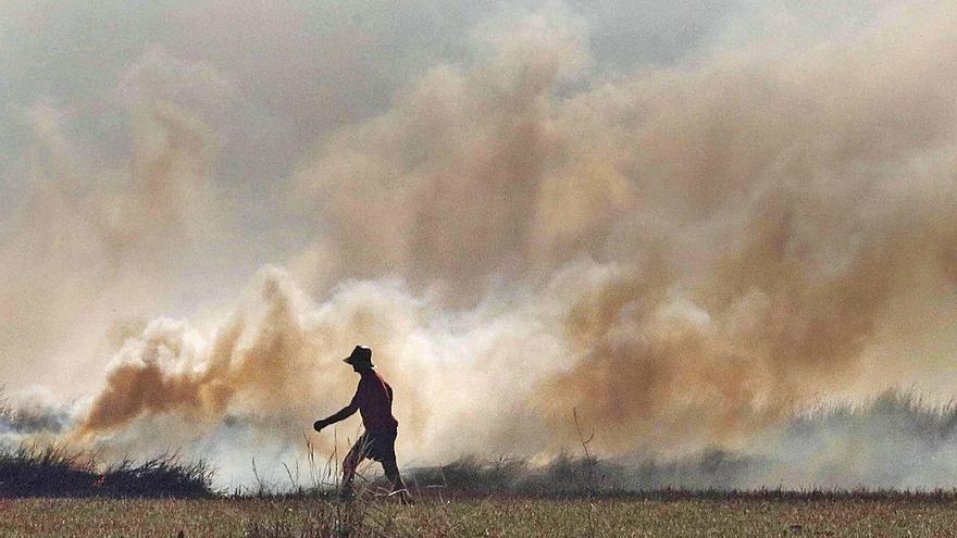 Dos años para acabar con la quema de paja en l'Albufera