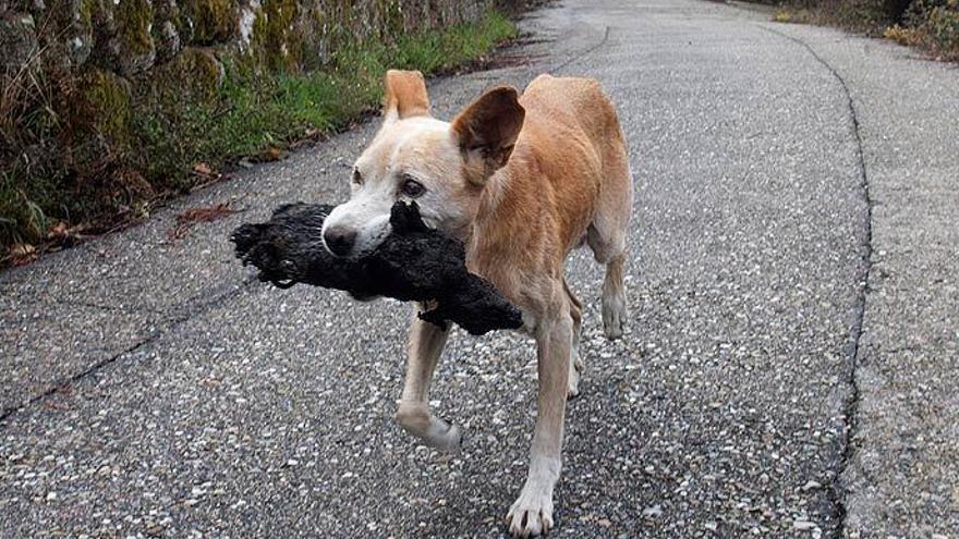 La commovedora foto d'una gossa amb la seva cria calcinada en els incendis de Galícia