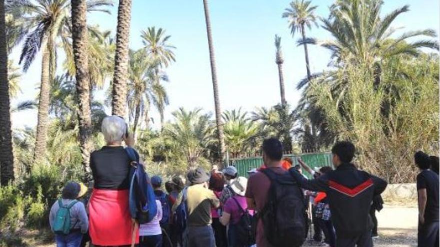 La ley del Palmeral fomentará los parques y museos en los huertos protegidos por la Unesco