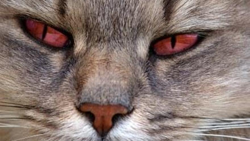 Mi gato tiene los ojos rojos