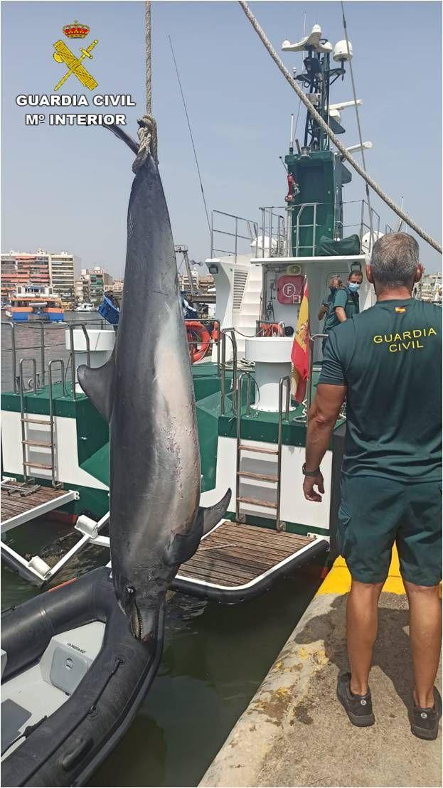 El delfín que ha aparecido muerto en Elx