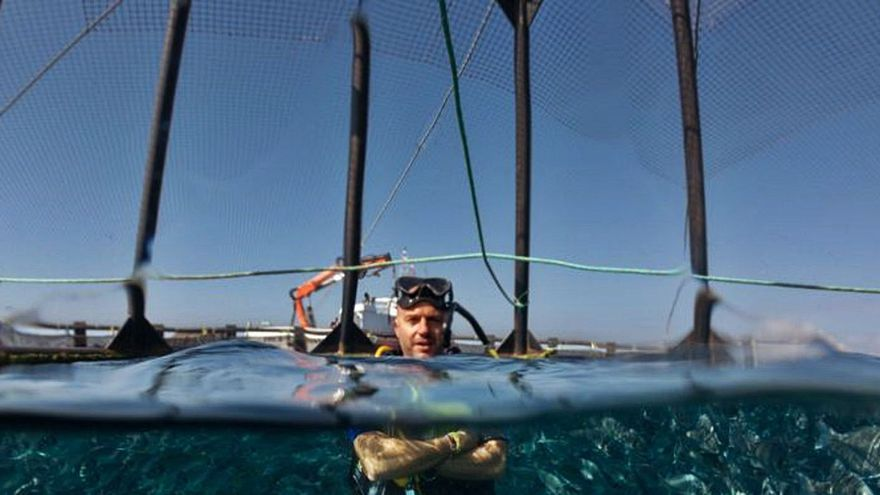 Eloy Meseguer: «La UA usa redes neuronales basadas en el cerebro para crear un aparato que cuenta los peces»