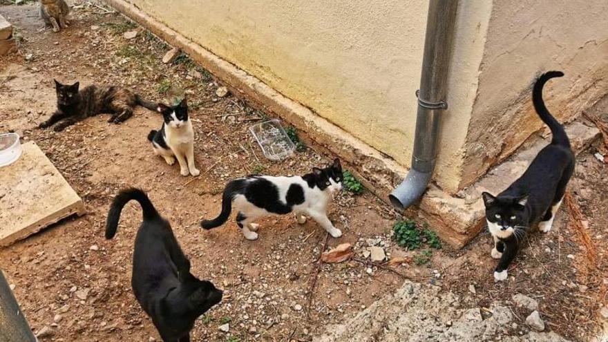 La proliferación de gatos y la escasez de voluntarios desbordan a las protectoras