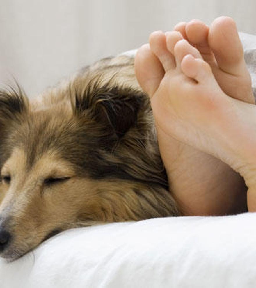 Los perros muestran su amor durmiendo con sus dueños.