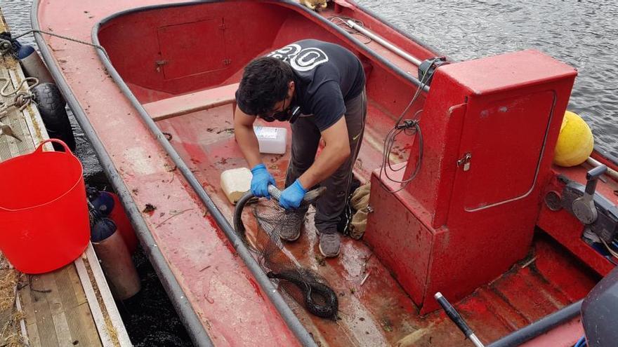 Una fantástica campaña de lamprea arruinada por el virus