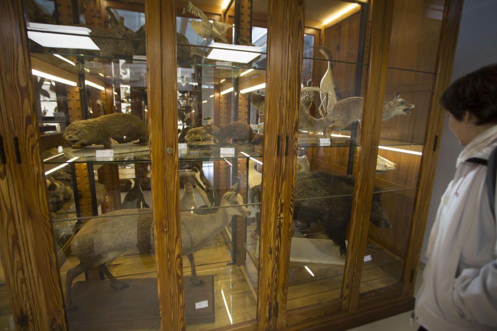 Nuevo Museo de Historia Natural