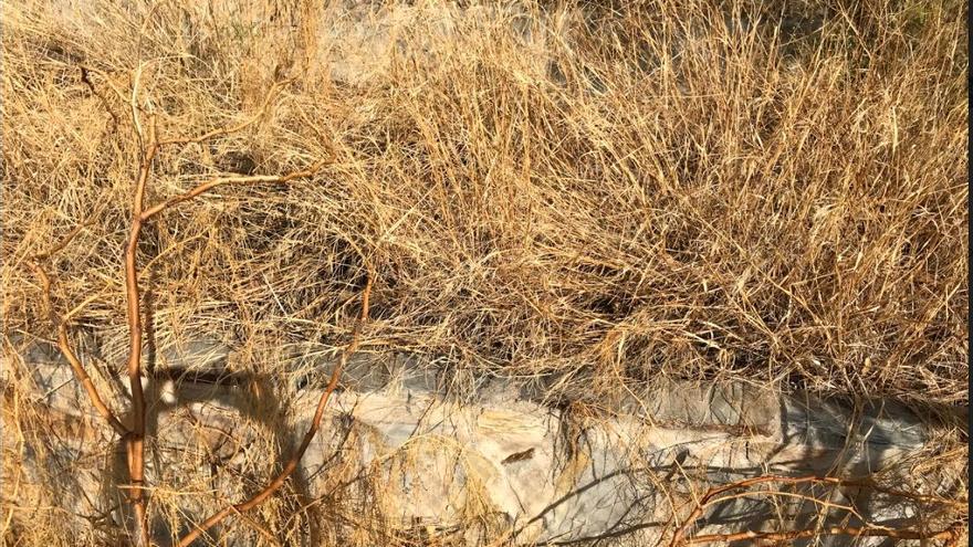 El huerto del IES María Moliner antes de la remodelación, muy seco y con hierbas.