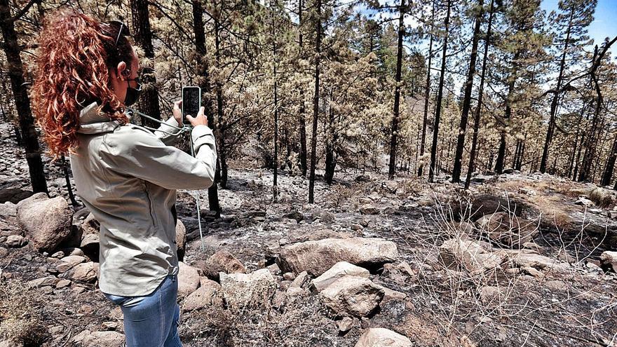 El Gobierno central aporta 300.000 euros para subsanar daños del incendio de Arico