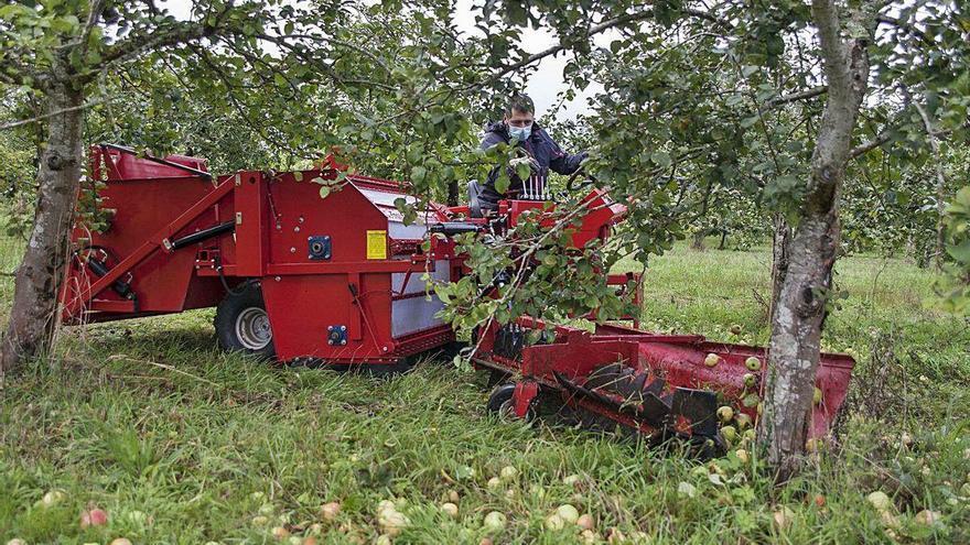 La Xunta impulsa la producción de manzana de sidra a través de dos polígonos agrarios