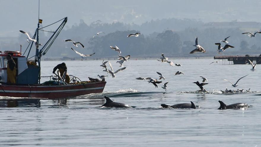 Un estudio determina la zona idónea para los delfines comunes en las Rías Baixas