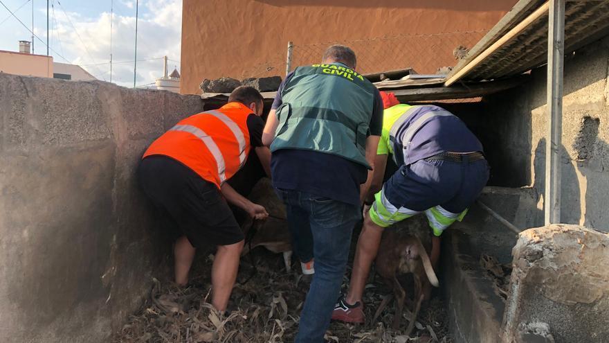 La Guardia Civil rescata animales ante la inminente llegada de la colada a las fincas de La Palma