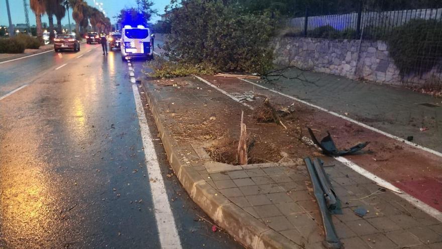 Un conductor choca contra un árbol y se da a la fuga andando en Alicante