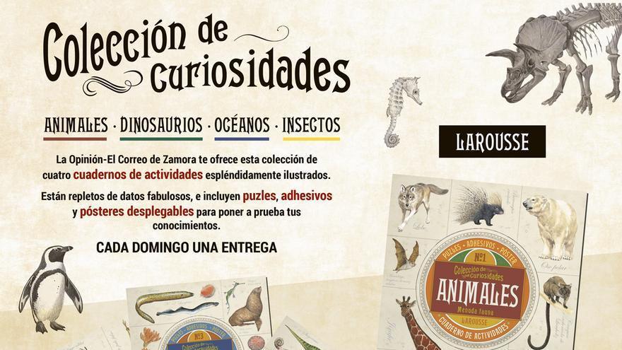 Colección de curiosidades: cuadernos de actividades