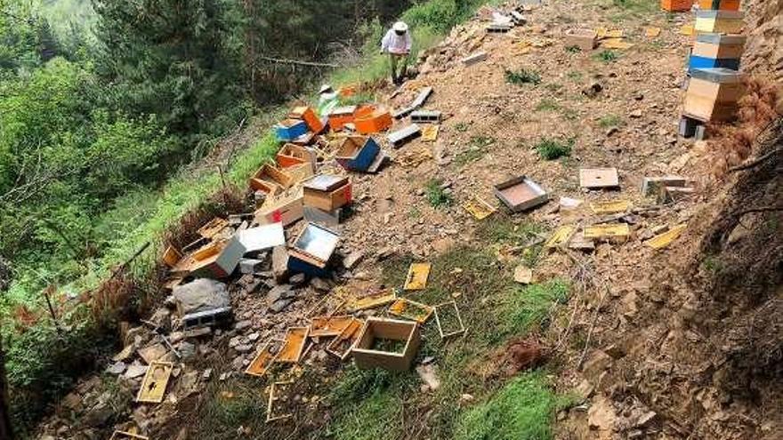 Un apicultor cangués ha perdido 37 colmenas este mes por ataques del oso