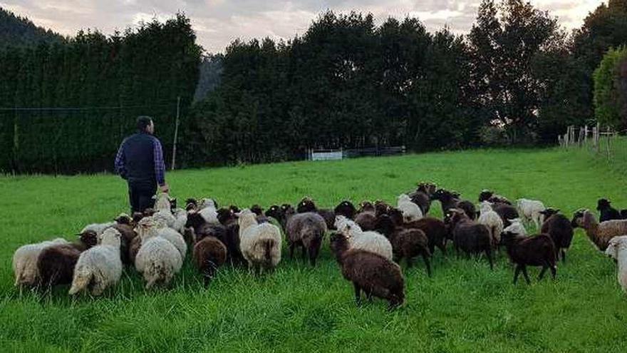 La ganadería de carne, bajo mínimos: la crisis desploma las ventas y siembra incertidumbre