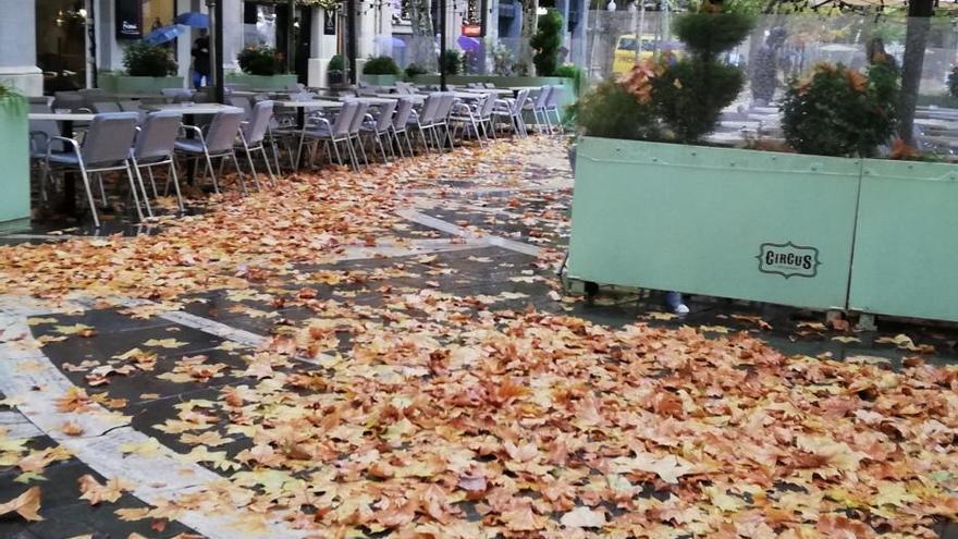 L'Ajuntament de Manresa activa al límit la recollida de fulles al carrer