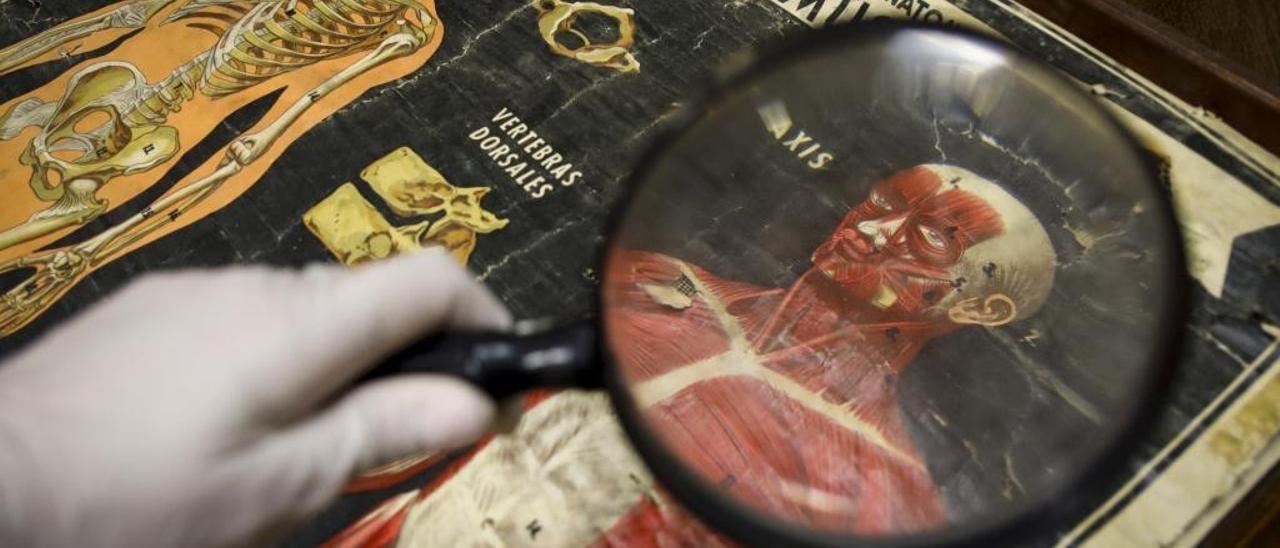 Pieza a restaurar en el Museo de Pusol de Elche