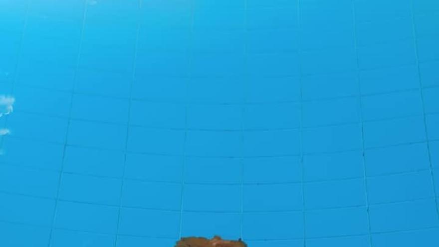 Las cacas invaden la piscina de Sangonera La Seca