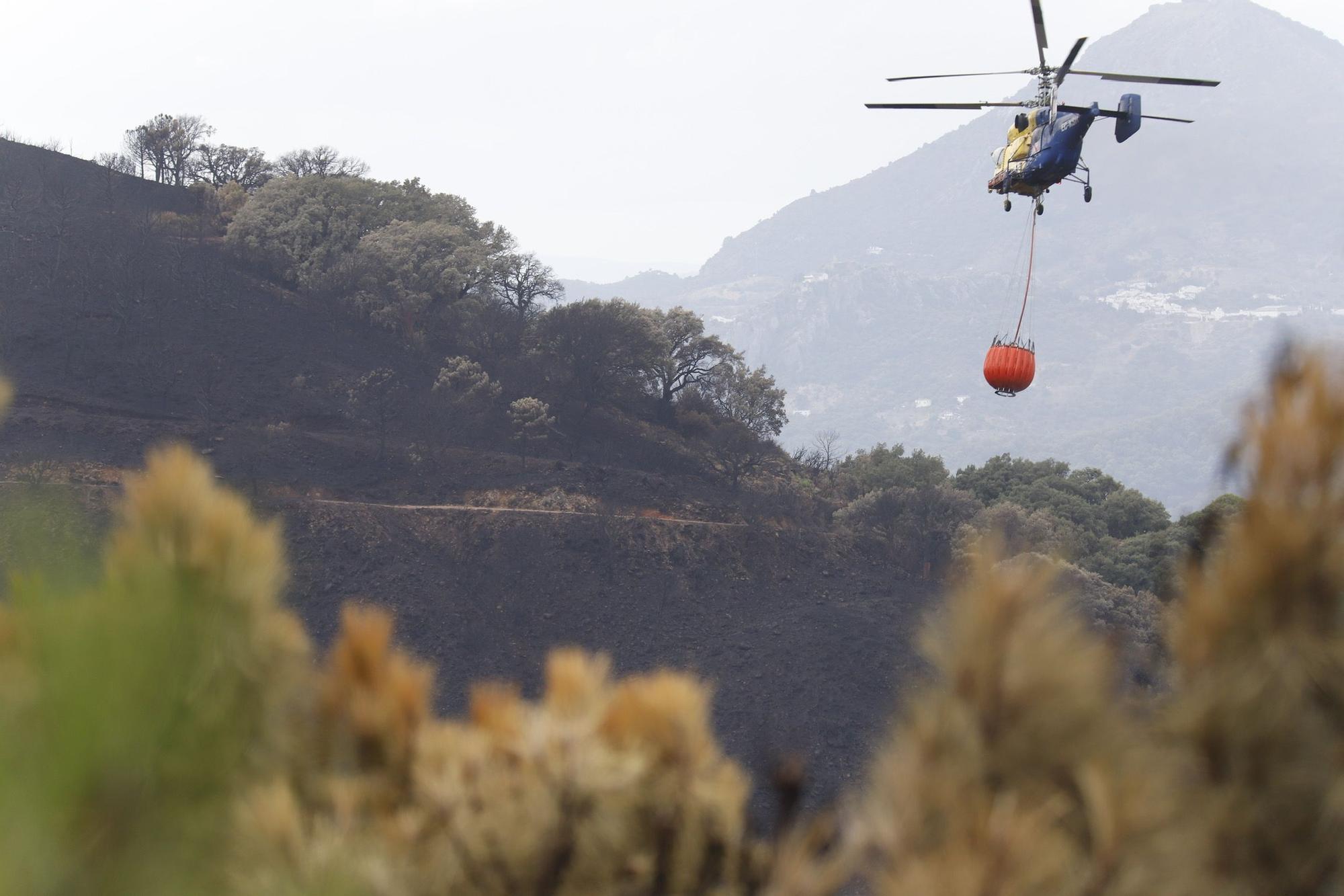 El Paraje de las Peñas Blancas en Estepona arrasado por el fuego