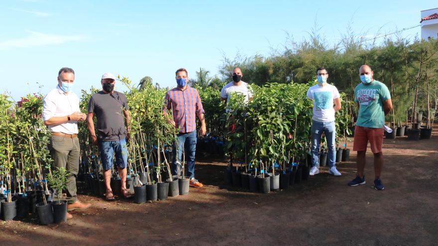 Los Realejos regala árboles frutales a personas sin empleo