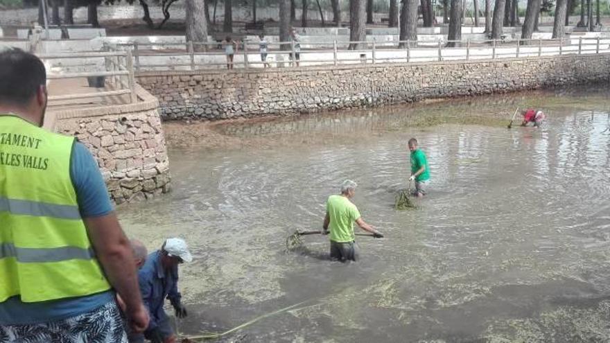 Los nenúfares podrán volver a las aguas de la Font de Quart