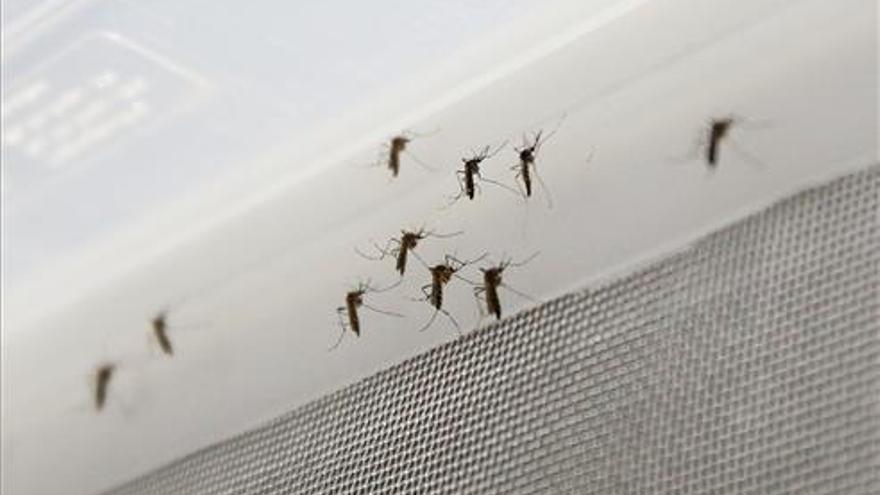 La plaga de mosquitos enciende las redes