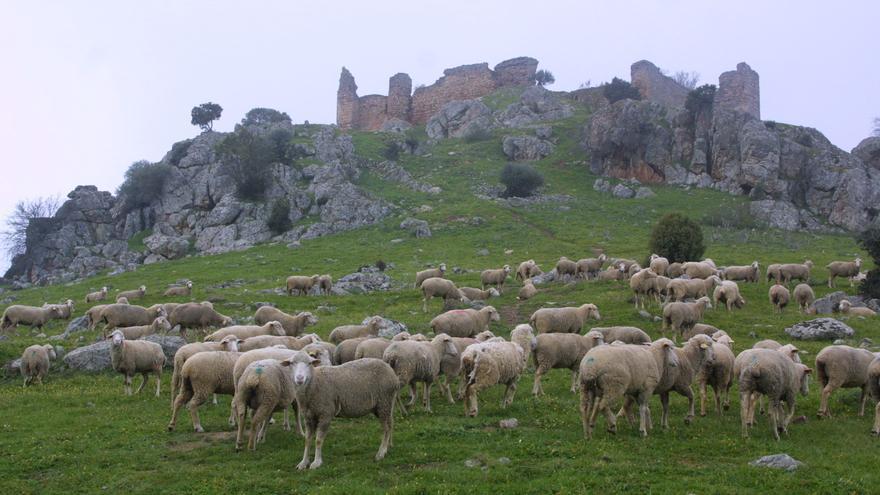 La Junta arregla el camino de acceso a la torre de vigilancia de Santa Eufemia