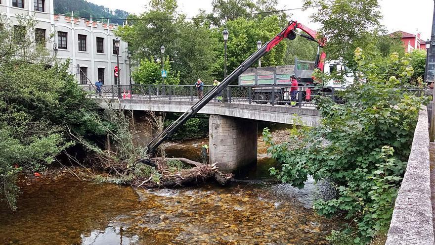 Retiran el árbol varado junto al puente de la Fábrica de Armas de Trubia