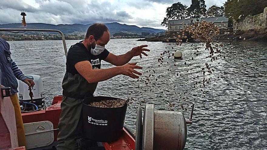Los mariscadores regeneran el banco de San Simón con la siembra de almeja