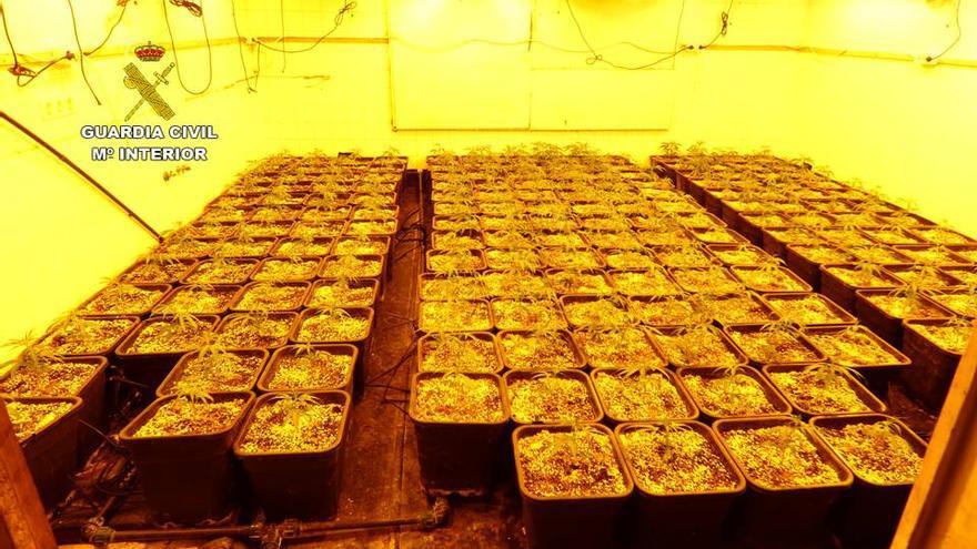 Detenido en Pedreguer un matrimonio con 287 plantas de marihuana, una pistola y 28.000 euros en efectivo
