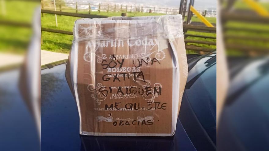 Abandonan a una gata dentro de una caja precintada en un contenedor de Poio