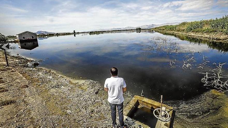 Los ecologistas reclaman al Consell que paralice el intento de reflotar  el macroplan de Dolores Golf